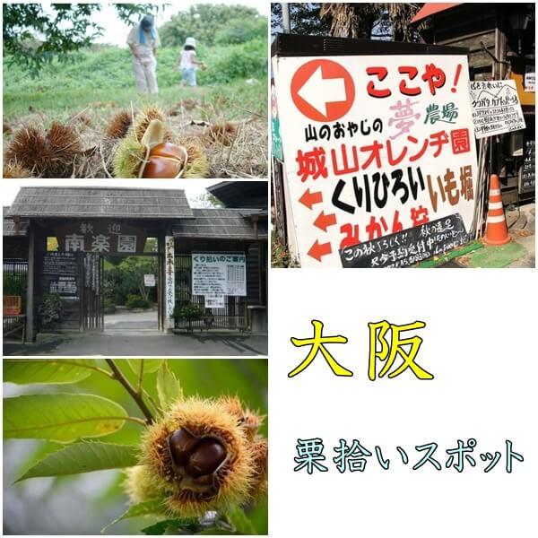 大阪府の栗拾いスポット|おすすめの農園は?入場は無料!