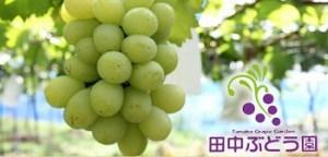 田中ぶどう園|大阪のぶどう狩りが出来る農園
