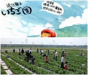 近江舞子いちご園|滋賀県の秋の味覚狩りが出来る
