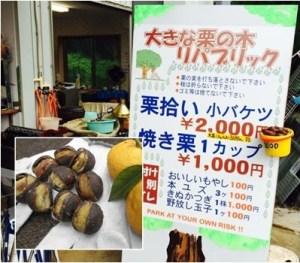 大きな栗の木リパブリック|関東地方の栗拾いが出来るスポット