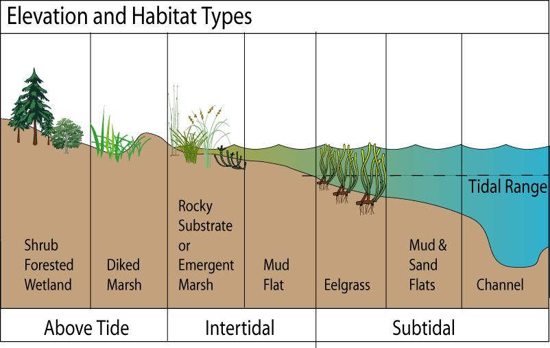 types of sand dunes diagram states matter change controlling factors: elevation / depth bathymetry