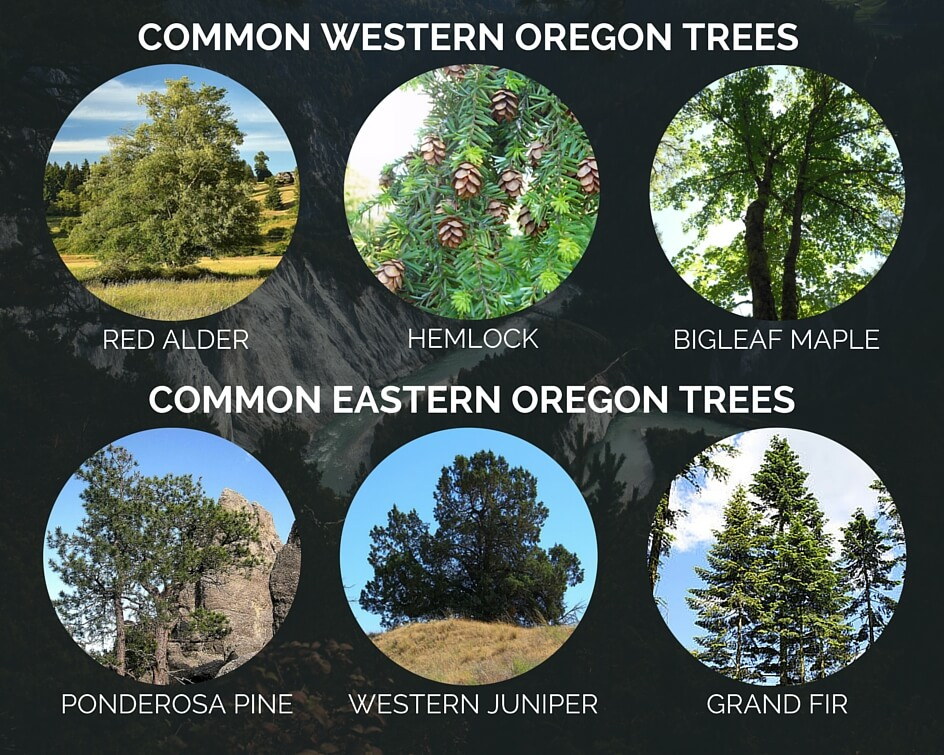 the tree identification guide