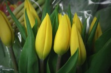 Yellow (Wa. Bulb)