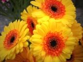Yellow/Orange Mini