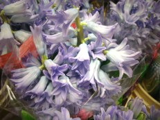 images_fresh_hyacinth_lavender_2