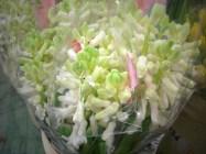 images_fresh_hyacinth_white