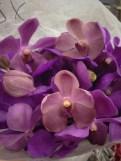 Purple Arandas