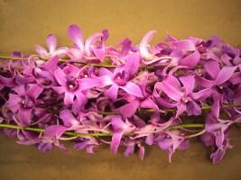 Purple (Hawaiian)