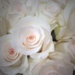 Bridal Akito