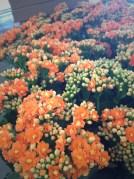 """Orange 4"""""""