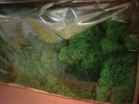 Reindeer Moss (Dark Green)