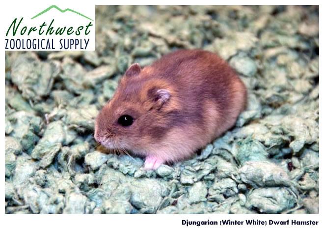Wholesale Pets  Companion Animals  Feeders  Northwest