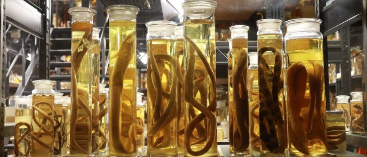 Animals preserved in formaldehyde at the Museum of Natural History in Berlin, Germany