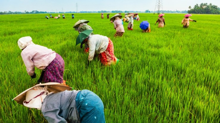 Workers in a rice field in China. Popularity of plant-based products is on the rise, and this is due to consumers becoming more impassioned for the environment, a report claims
