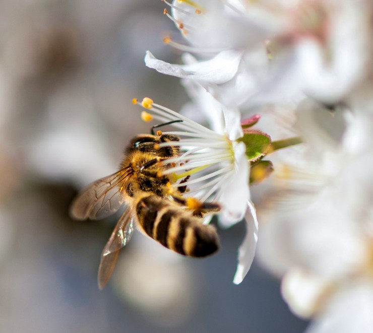 VegNews.HoneyBee