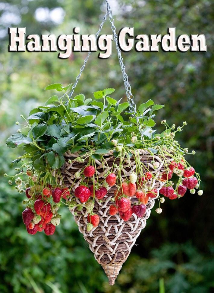 Hanging Garden: Fruits and Vegetables in Hanging Baskets