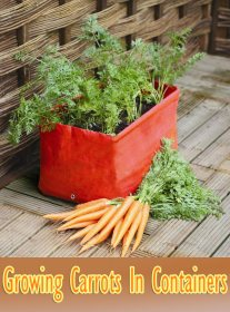 How To Grow Carrots In Containers