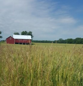 frier-farm