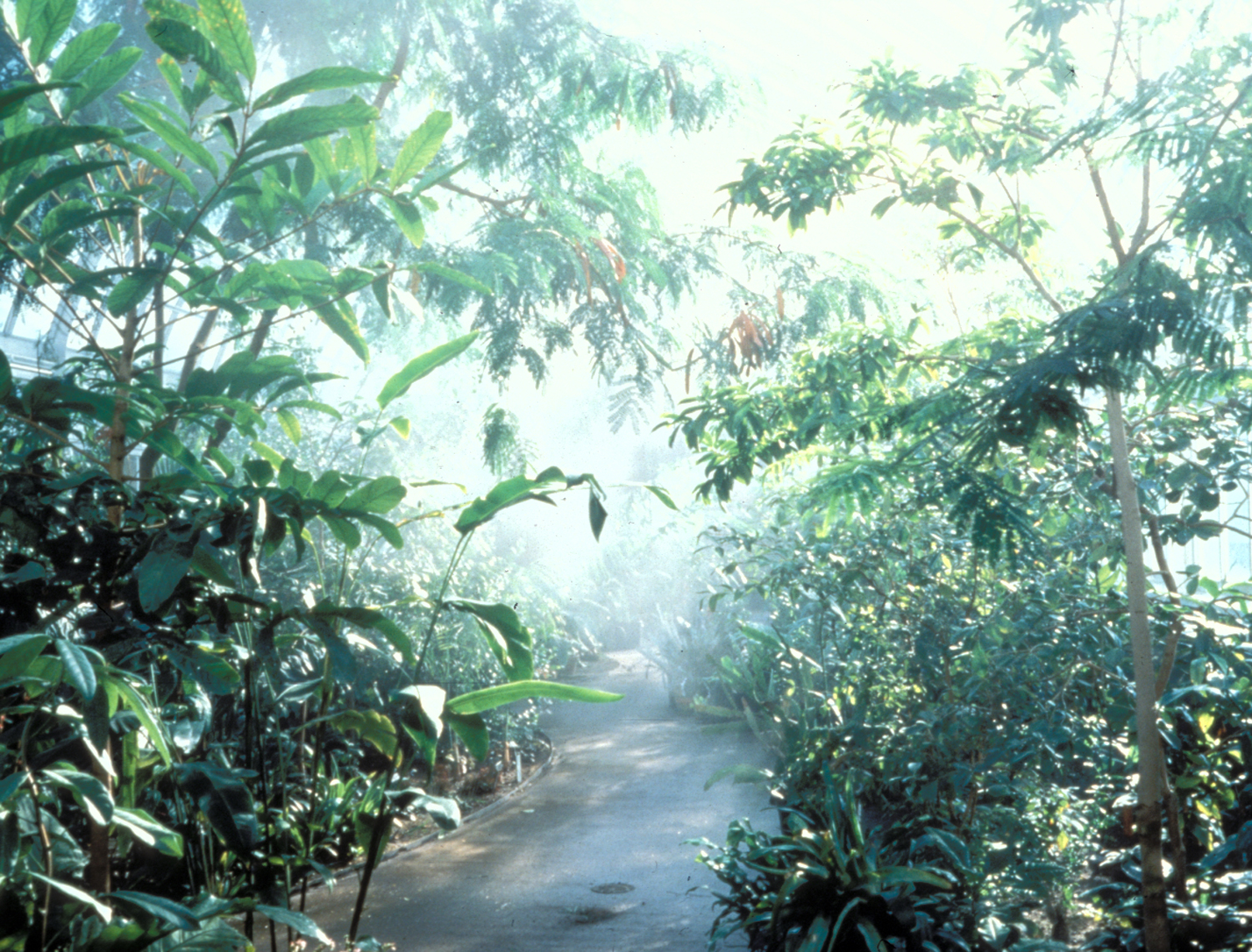 Tropical Rainforest Tropical Rainforest Abiotic Factors