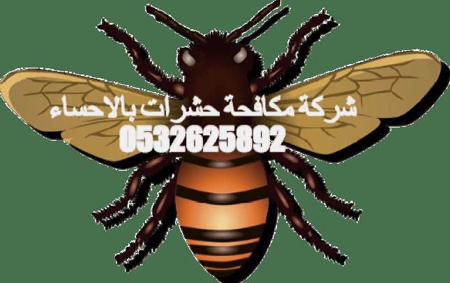 شركة مكافحة حشرات بالاحساء 0532625892