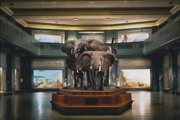 American Museum Of Natural History Visitor Information