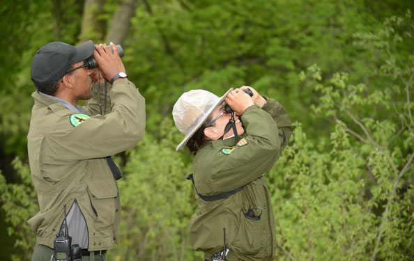 two park rangers use binoculars to look up into the trees
