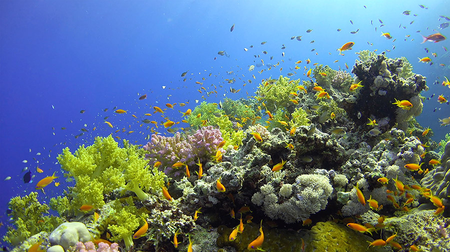 Redford Center: Reefs at Risk