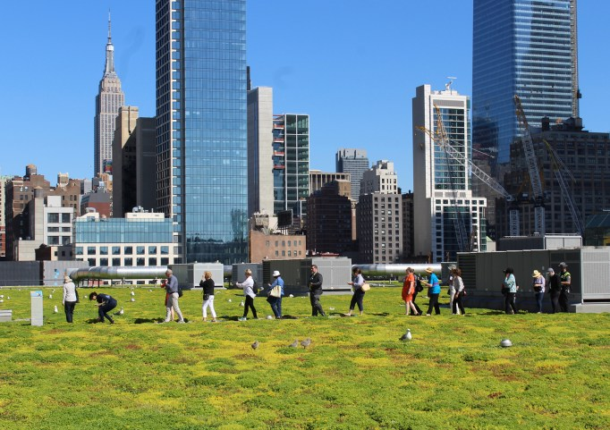 Donors and staff tour the Javits Center green roof in the spring of 2019.