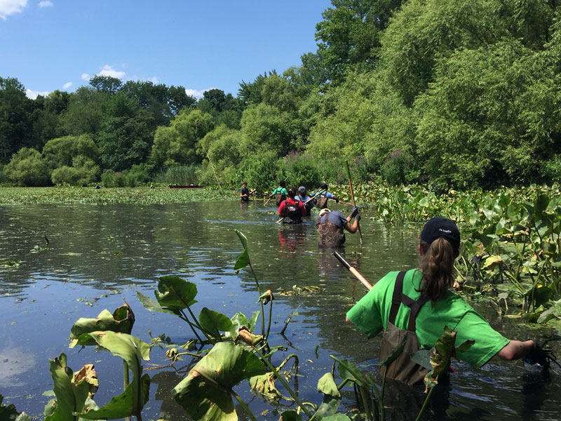 A group cleaning a pond