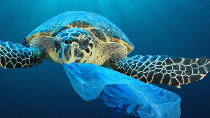 Panama-is-the-first-Central-American-country-to-ban-single-use-plastic-bags-730x410
