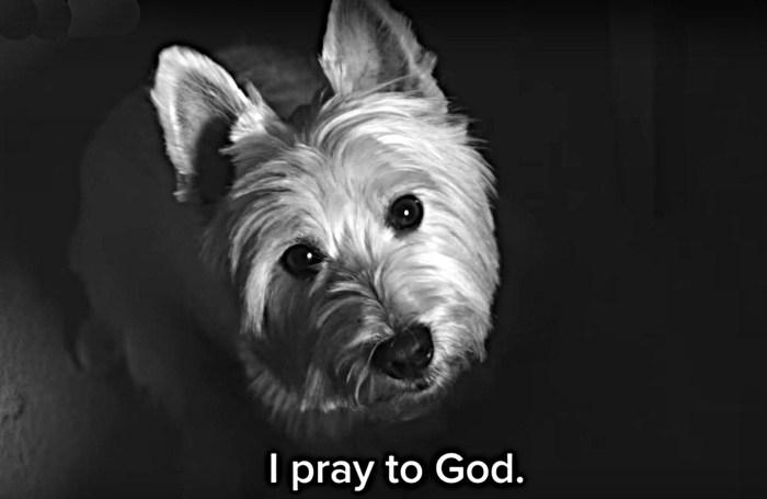 Dog's prayers go unanswered