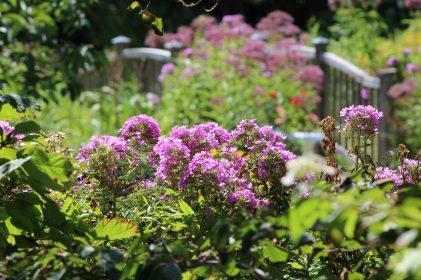 Queens Botanical Garden 44