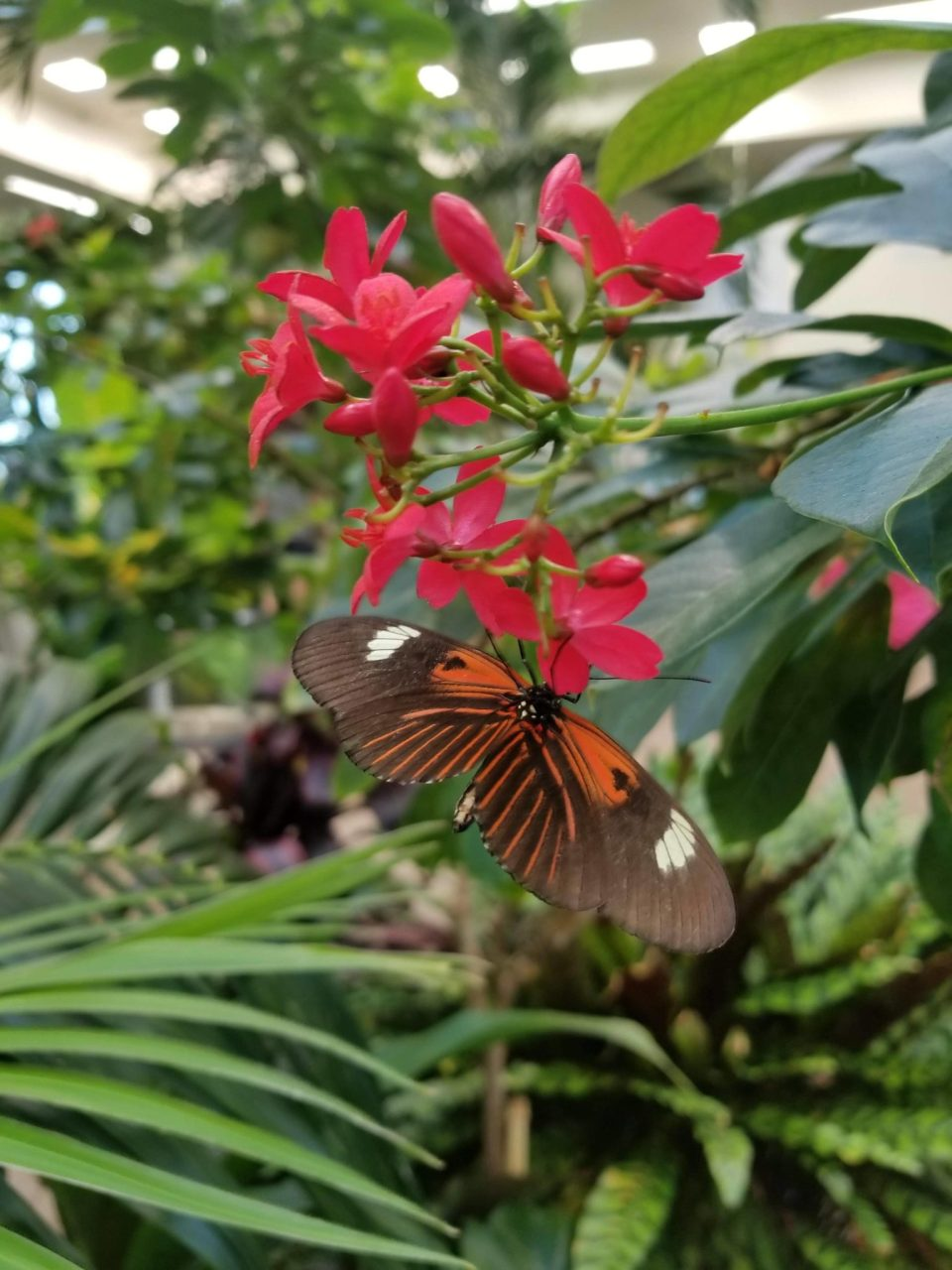 Hershey Gardens Butterfly Atrium