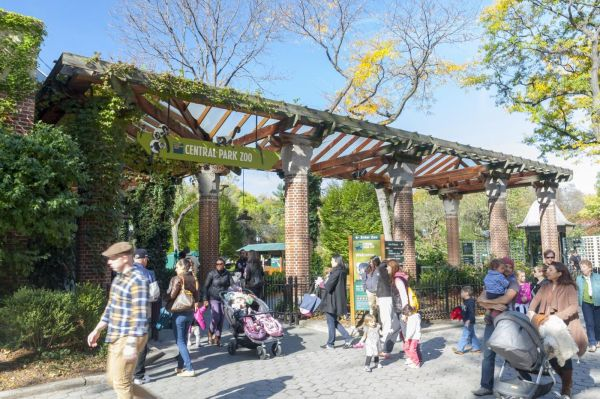 Man Climbs Central Park Zoo Aviary Refuses Leave - Ny Daily