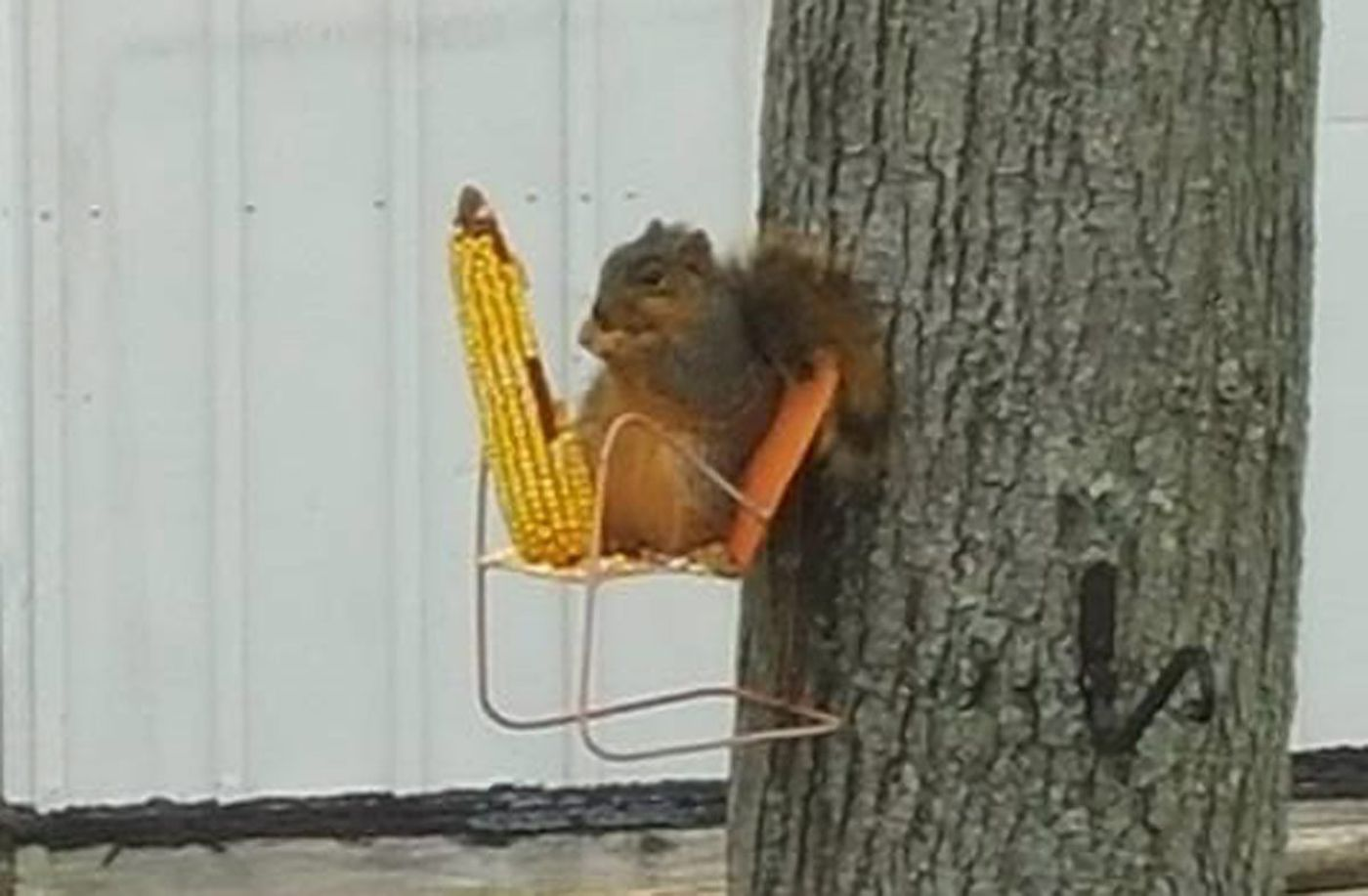 squirrel feeder chair wonderfully woven hanging sims 4 this has his own tree where he chills out