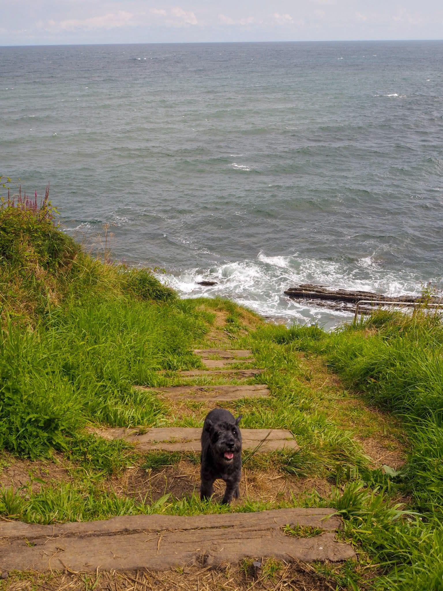 requisitos para viajar con perro