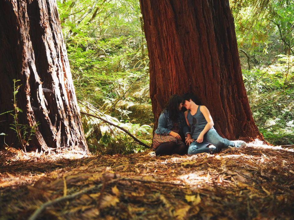 sequoia, árbol
