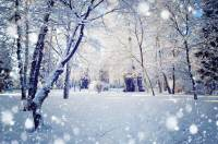 NYIP Photo Articles : Photographing Falling Snow