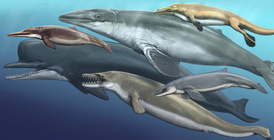 Evolution of Dolphins and Whales  College of Osteopathic Medicine  NYIT