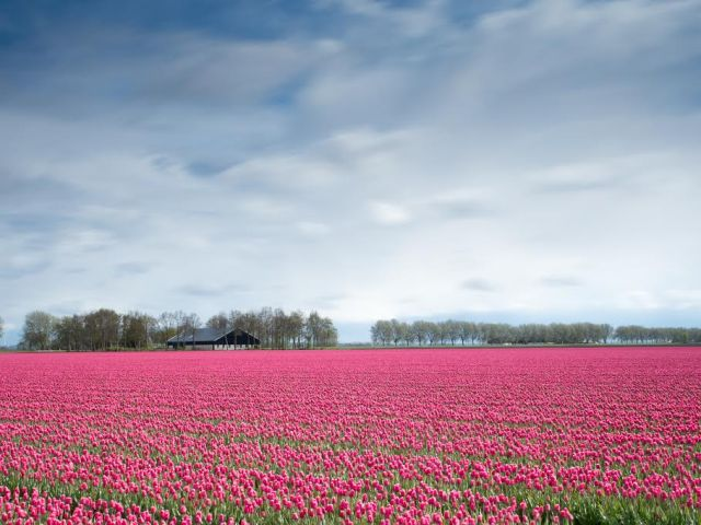 best places in netherlands - tulips