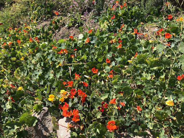 el albergue ollantaytambo - pachamanca flowers