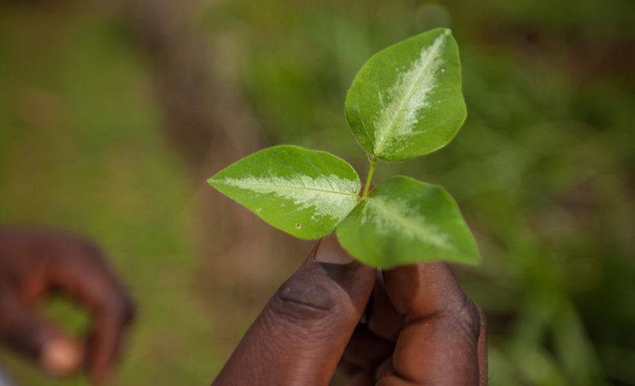 1703-Nyota-Kenia-Lwala-0810