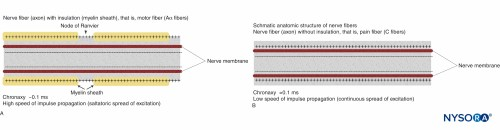 small resolution of figure 2 schematic anatomic structures of nerve