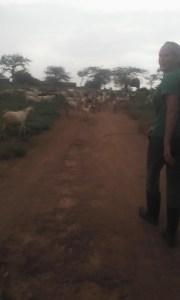 mary kate goats