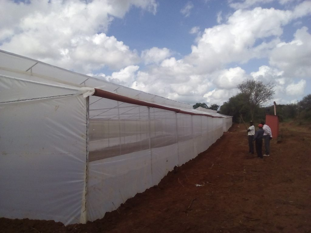 Completion of Two New Greenhouses at Nyumbani Village!