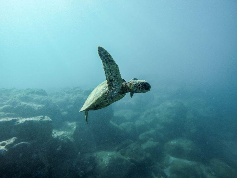 スリランカでサーフィンをするとウミガメと遭遇できる