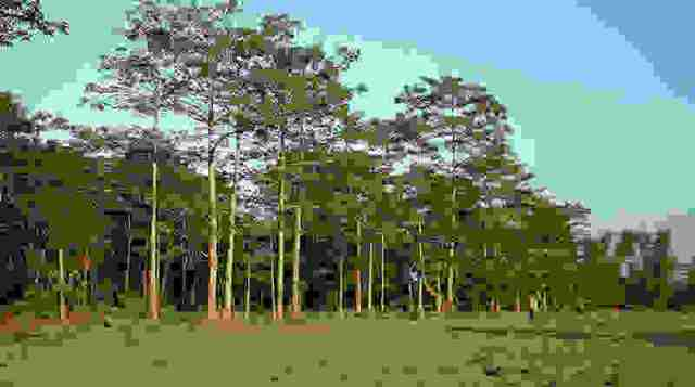 jadav-payang-forest-1.jpg