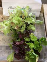 plant salade