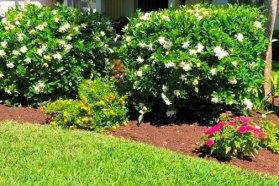Homeowner Garden