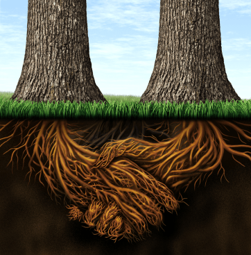 Powerful Relationships, Strong roots, Mark Conway, Oak Consult